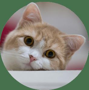 Продукти за Котки