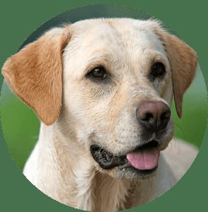 Продукти за Кучета