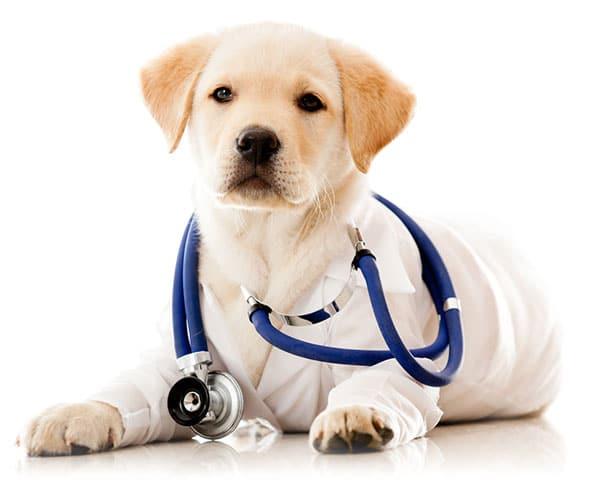 ветеринарномедицински продукти